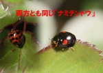 Photo_20200316072601